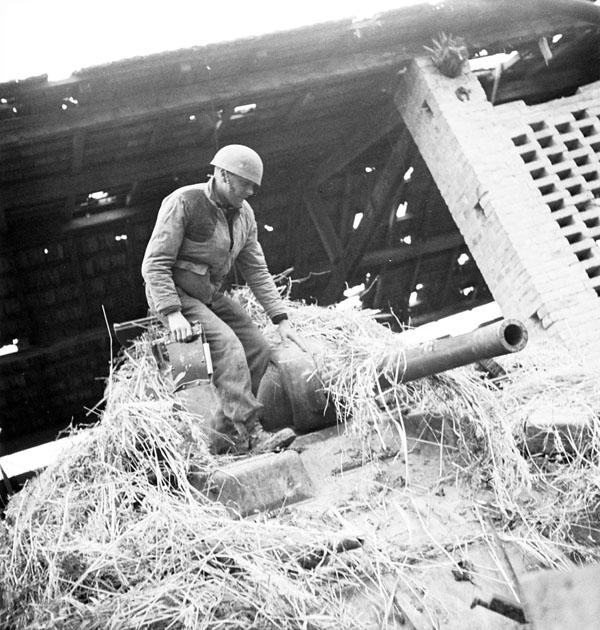 Photo of In the Hay