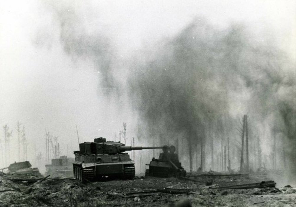 Photo of The German Tiger Stalks It's Prey